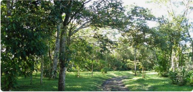 Finca en Villavicencio, VILLAVICENCIO 74934, foto 18