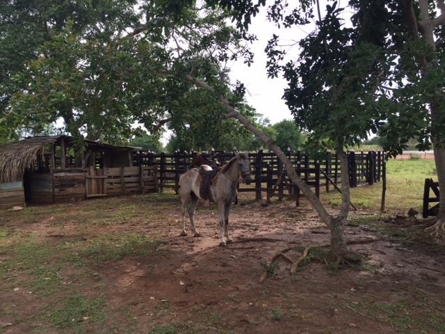 Casalote en  Santa Lucia, MONTERIA 71292, foto 11