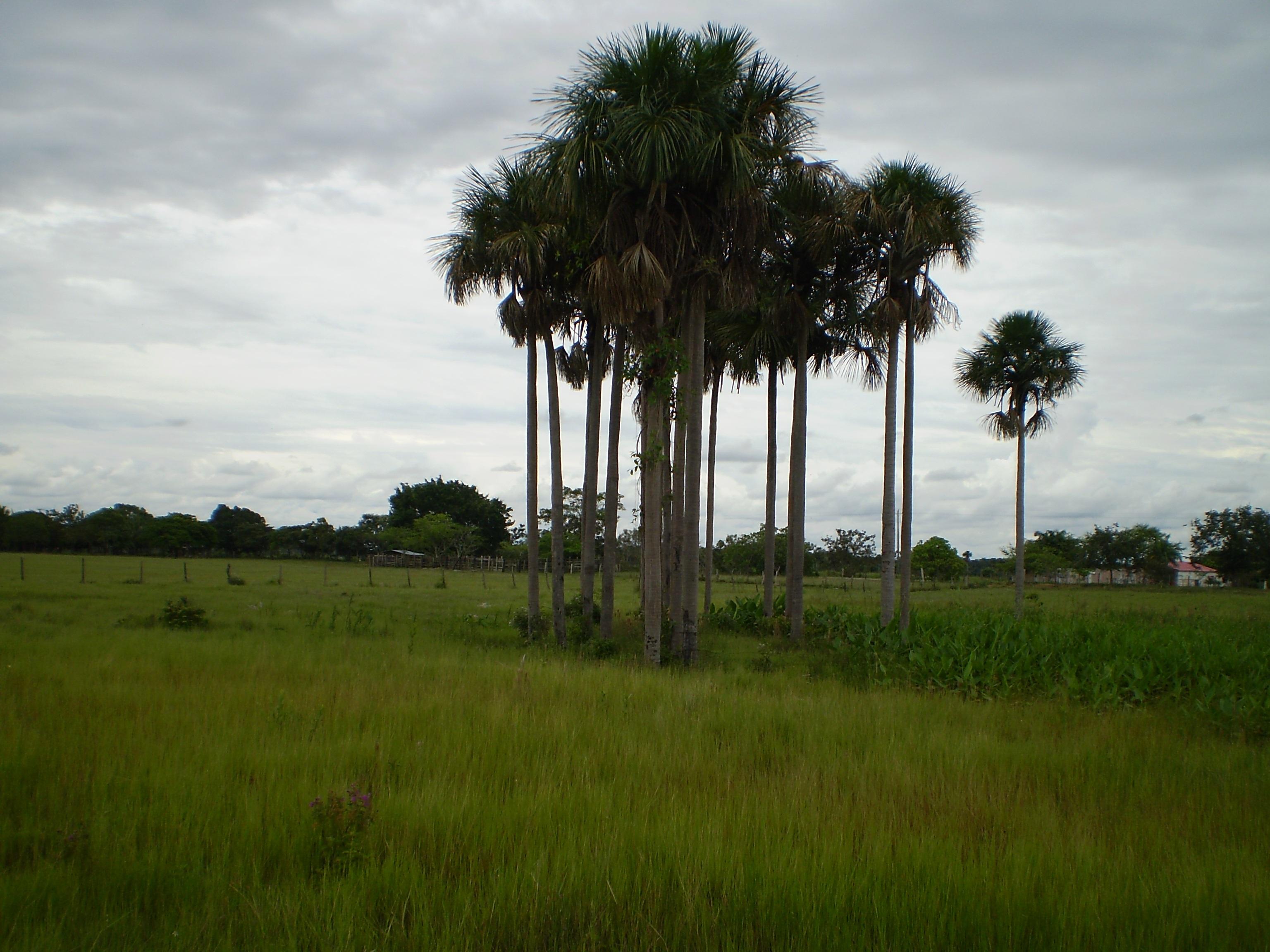 Casalote en Villavicencio, VILLAVICENCIO 3691, foto 4