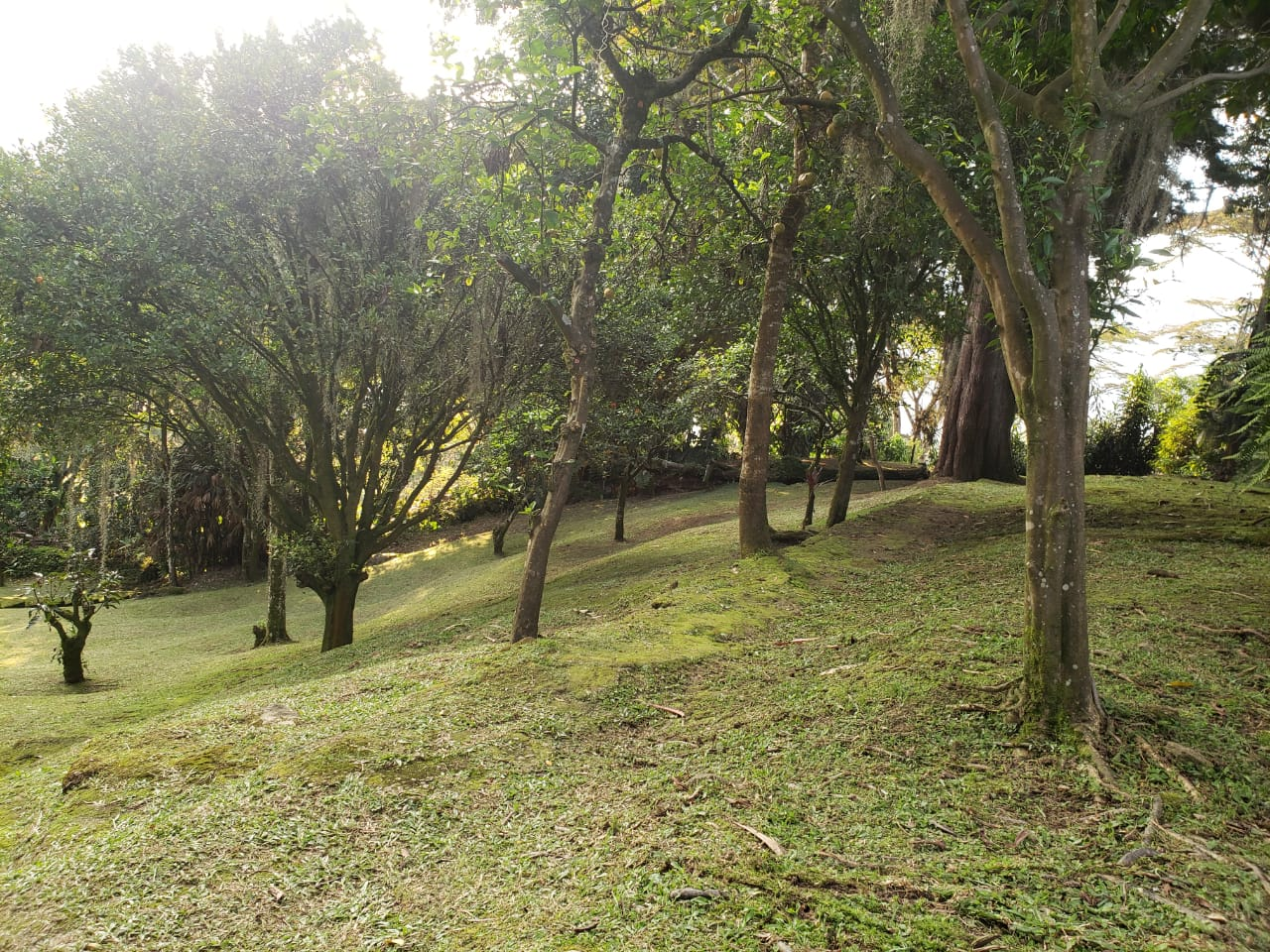 Casa en El Escobero, ENVIGADO 2209, foto 26