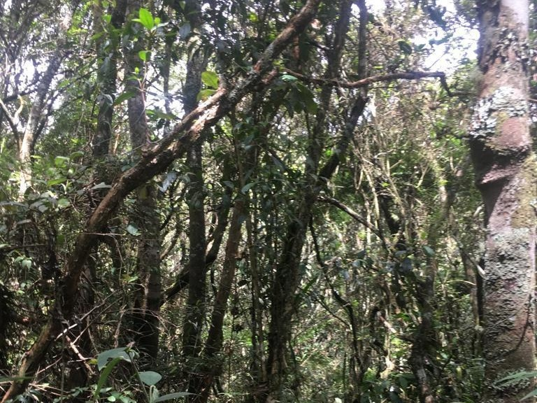 Lote en Medellin 23368, foto 7
